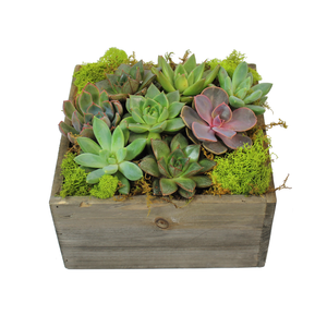 Box of Succulents