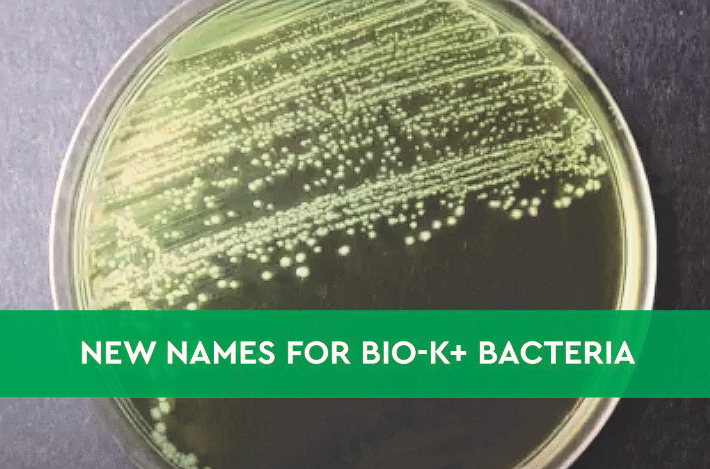 New names, same bacteria: science is renaming two of your favourite Bio-K+ bacteria!