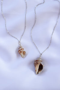Large Natural Seashell necklace
