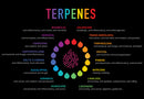What Are Terpenes & Why Do They Matter?
