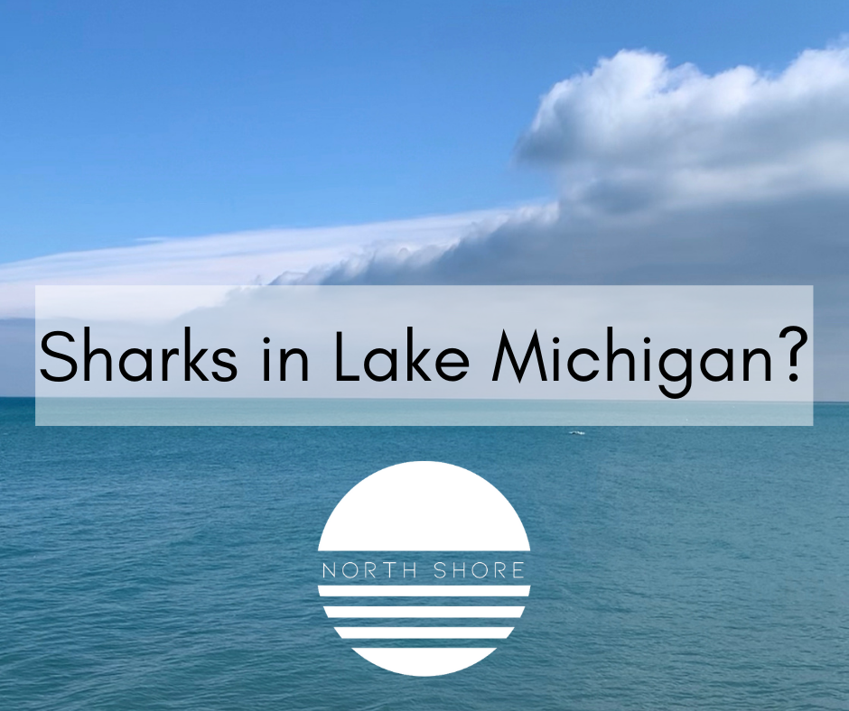 Are there sharks in Lake Michigan?