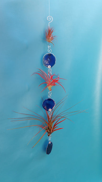 Blue Agate Triple with red air plants