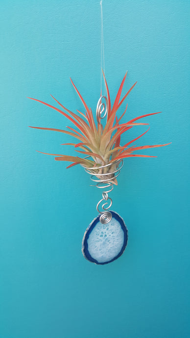 Blue Agate Twiddle with red air plant