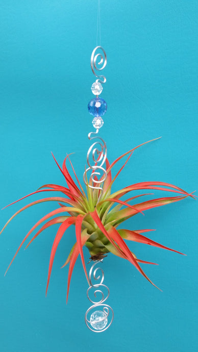 Blue Acrylic beads with red air plants