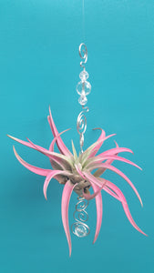 Clear Acrylic beads with pink air plants