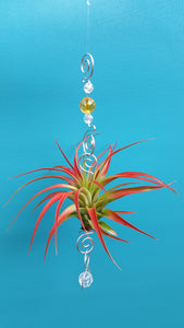 Gold Acrylic beads with red air plants