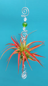 Green Acrylic beads with red air plants
