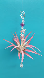 Purple Acrylic beads with pink air plants