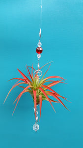 Red Acrylic beads with red air plants