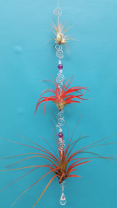 Air Plant Bling Triple (Hanging)