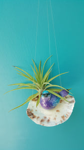 Air Plant Shell Saddleback  Bird Garden (Hanging)