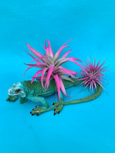 Load image into Gallery viewer, Iguana Garden