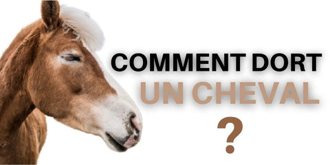 Comment dort un cheval ?