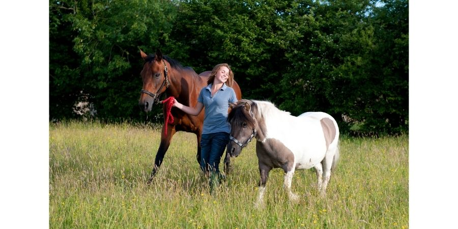 taille-poney-cheval
