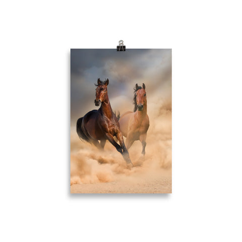 Poster Cheval Duo Sauvage