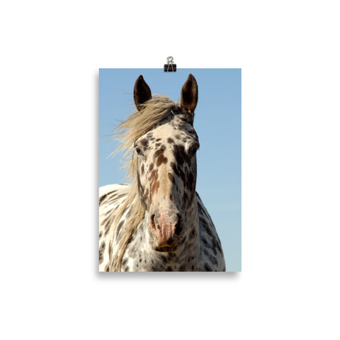 Poster Cheval Appaloosa