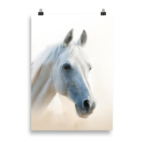 Poster cheval blanc