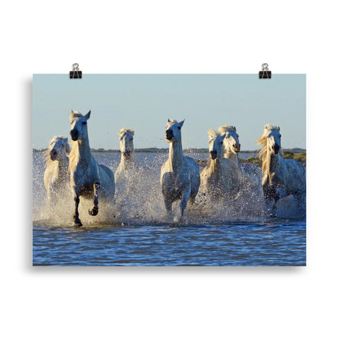 Poster cheval Camargue