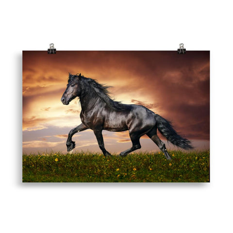 Poster cheval frison