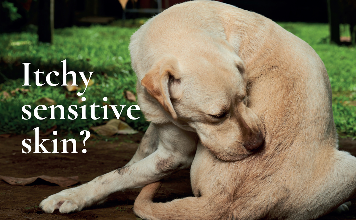 Sensitive Skin and Itching in Dogs