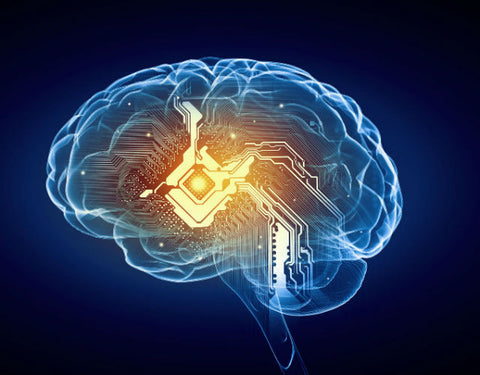Guide to cognitive Performance | Pharm Biotics