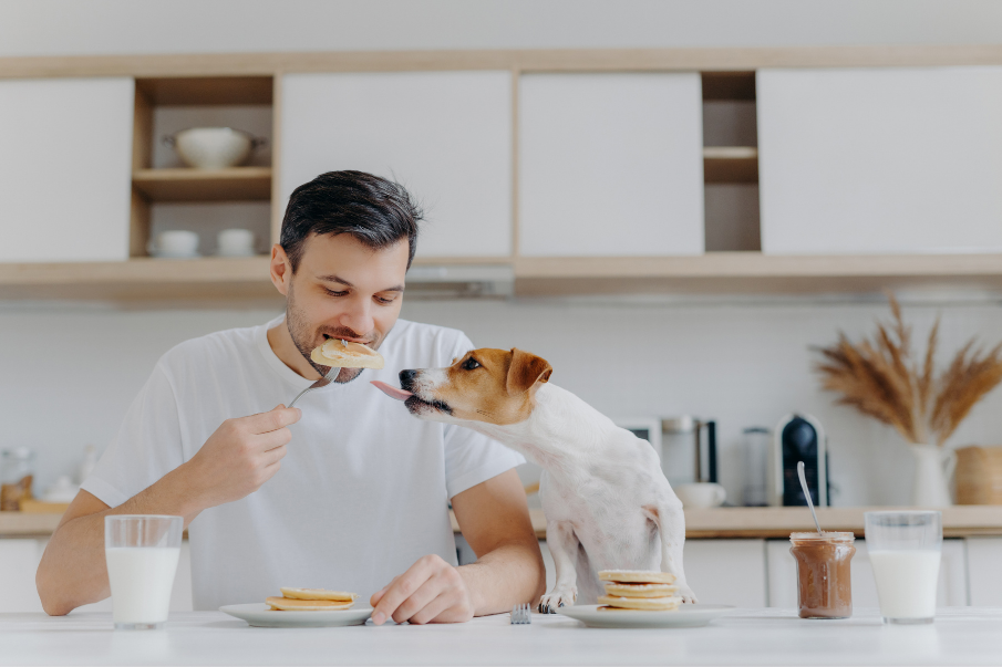 dog trying to eat a man's pancakes