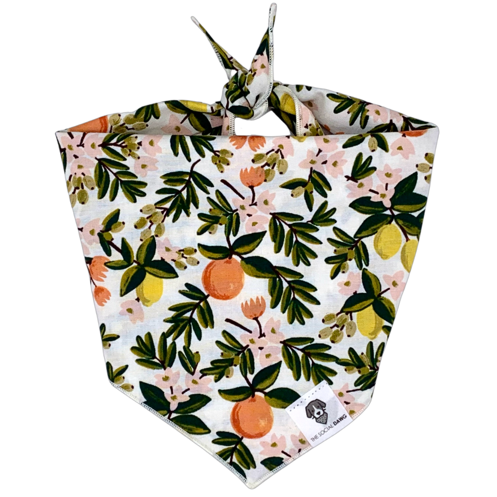 Citrus floral cream dog bandana