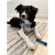 Load image into Gallery viewer, Dog wearing bad to the bone blue slip on bandana