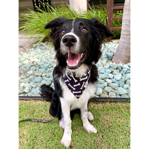 Dog wearing black and white bone print bandana