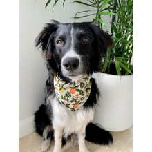 Load image into Gallery viewer, Dog wearing citrus floral cream dog bandana