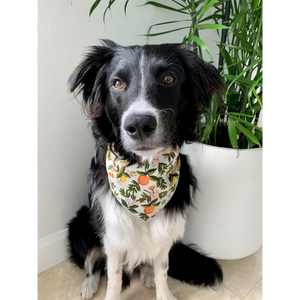 Dog wearing citrus floral cream dog bandana