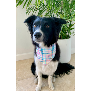Dog wearing spring plaid dog bandana