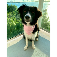 Load image into Gallery viewer, Dog Wearing Light Pink Gingham Check Tie-On Dog Bandana
