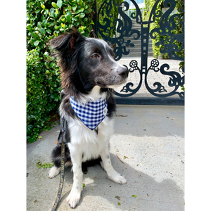 Dog wearing navy gingham check dog bandana