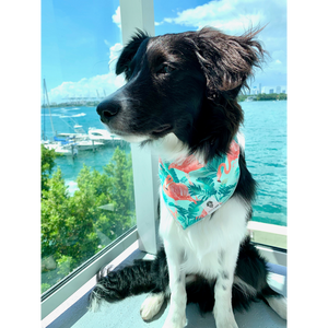 Dog wearing tropical mint and pink flamingo bandana