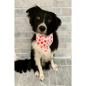 Dog wearing red and pink Valentine's Day heart dog bandana
