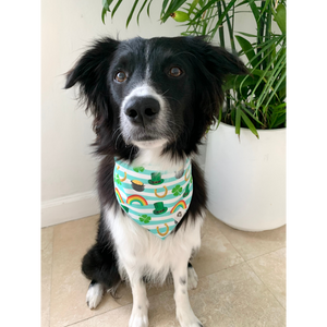 Dog wearing St. Patrick's Day gold rainbow dog bandana