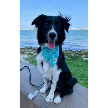 Load image into Gallery viewer, Dog wearing turquoise multi-colored bones slip on bandana
