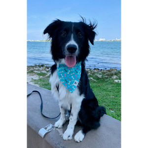 Dog wearing turquoise multi-colored bones slip on bandana