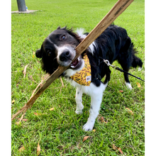 Load image into Gallery viewer, Dog wearing yellow branch manager slip on bandana
