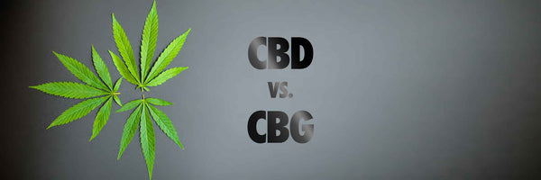 What's the Difference? | CBD vs. CBG