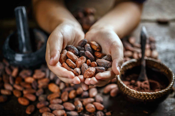 Cacao | Nature's Chocolate