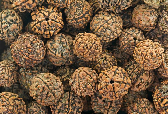 1-21 MUKHI: THE SECRET POWER OF RUDRAKSHA