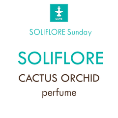 DAME Sunday Soliflore Cactus Orchid