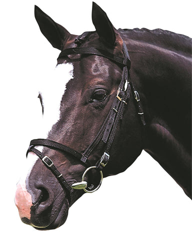 Kincade Web Flash Bridle