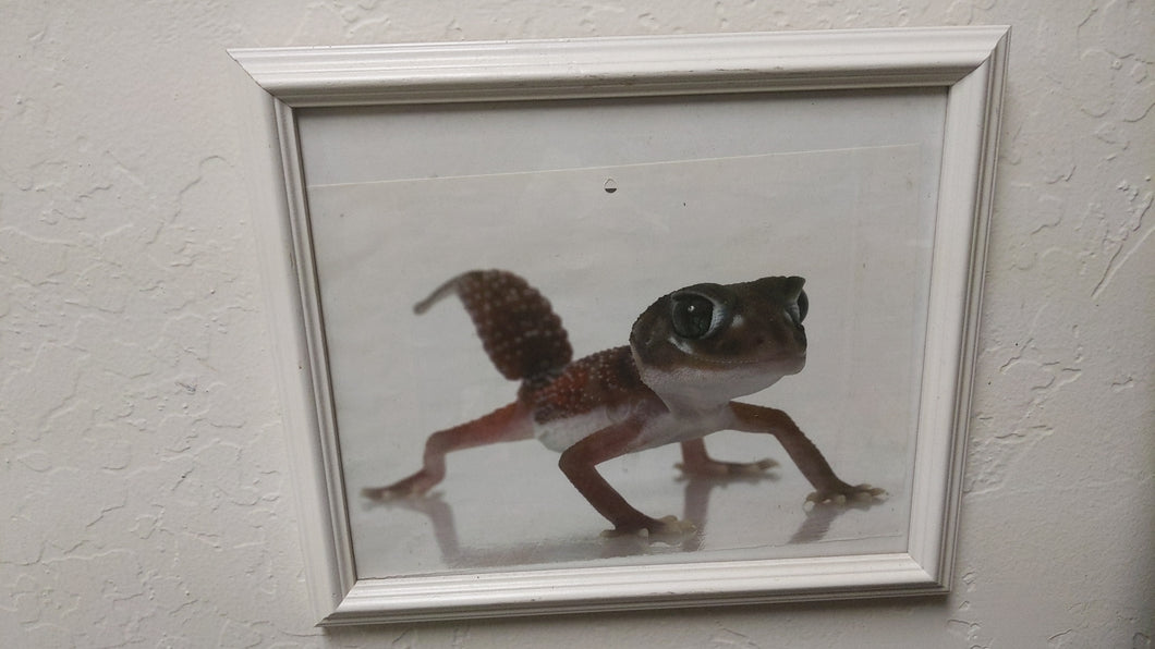 Framed Full Lizard Picture