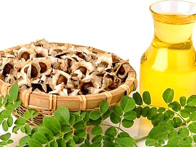 What's so Important About Moringa Oil and How to Select a Great Quality - Mother Nature Organics