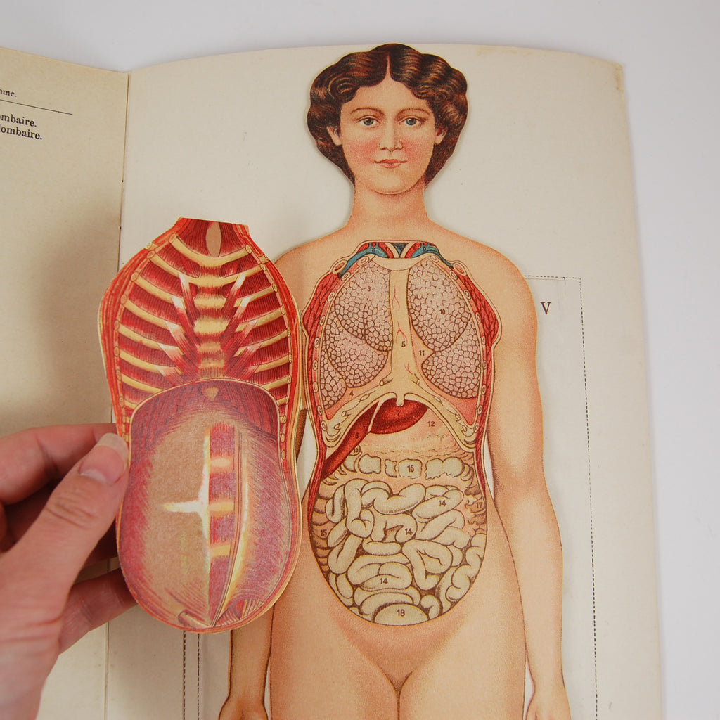 Seeing Inside: The Golden Age of Anatomical Flapbooks | Alembic Rare ...