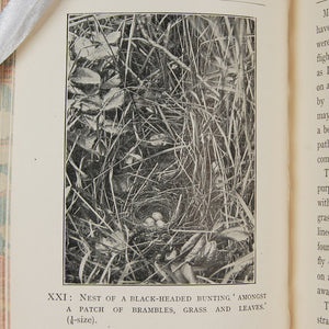 Vos, George H. | Birds and Their Nests and Eggs