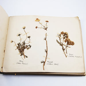 Skinner, Elsie T. | Collection of Flowers Classified According to Natural Orders